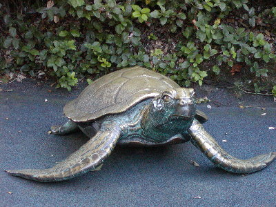 picture of bronze turtle