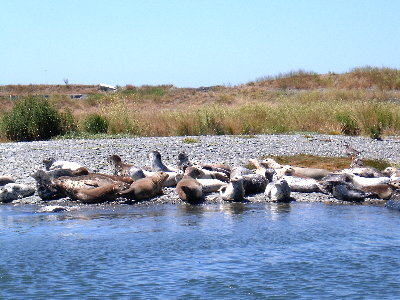picture of seals