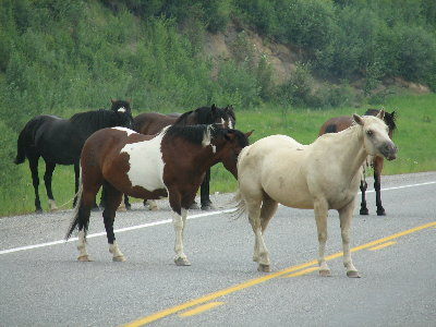 picture of wild horses