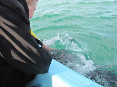 pic of Linda touching a baby whale